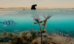 Сергей Сорокин: Зимняя рыбалка. Ловля окуня зимой по первому льду на мормышку
