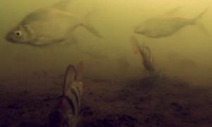 Зимняя рыбалка, Подводные съёмки видео №1