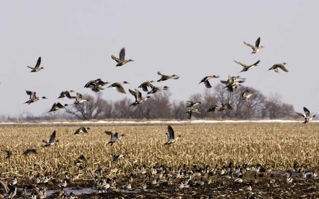 Охота в Вологодской области
