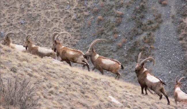 Охота в Республике Алтай