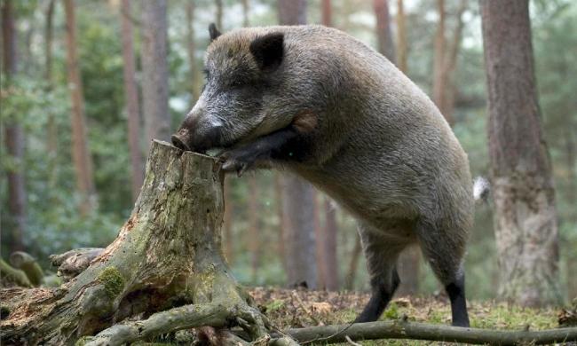 Охота в Республике Карелия