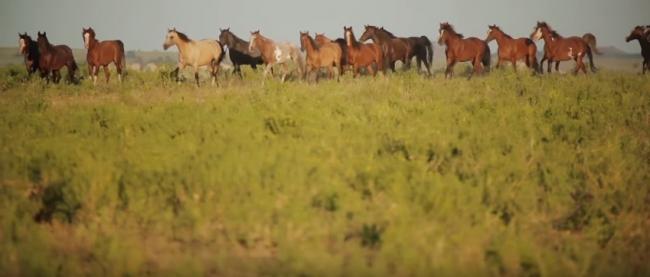 Живая Планета: Про животных и людей
