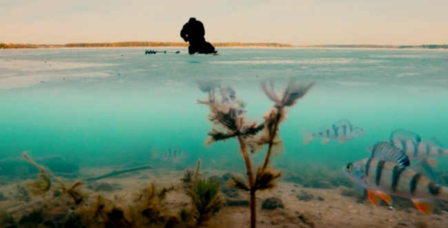 Ловля окуня зимой по первому льду на мормышку (Видео подо льдом)
