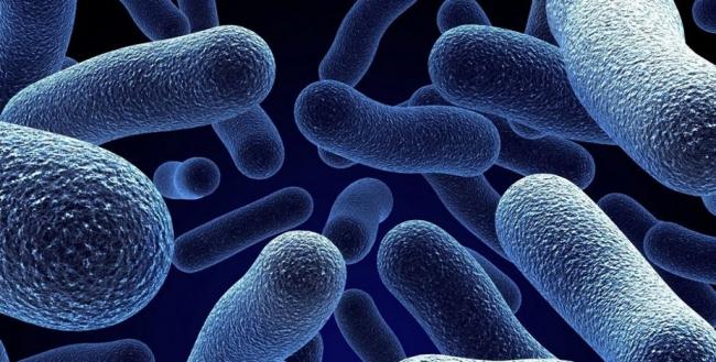 О микробах и бактериях, они гости или хозяева