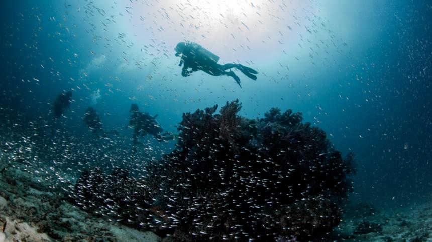 Подводная охота и дайвинг в Италии