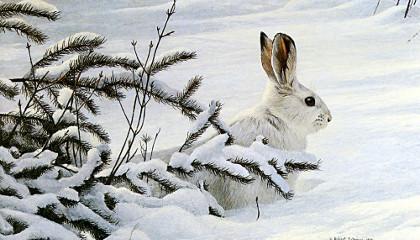 Зимняя охота во Владимирской области на зайца и тетерева