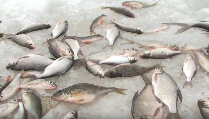 Рыбалка с зимней поплавочной удочкой
