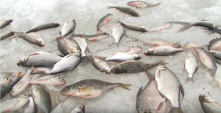 Рыбалка с зимней поплавочной удочкой.