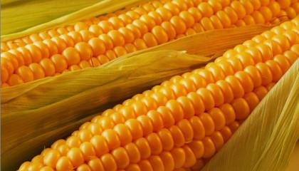Андрей Слепнёв: Насадки из кукурузы для белой рыбы