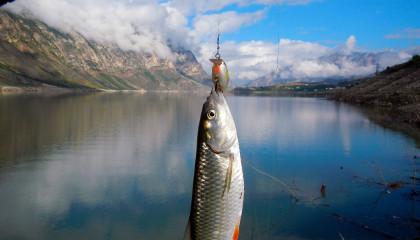 Рыбалка в Дагестане на Чиркейском водохранилище