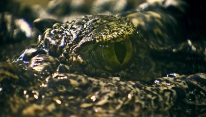 Крокодил (Сатурн) из московского зоопарка знал Гитлера?