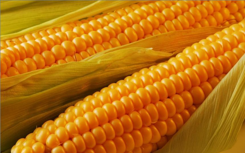 Насадки из кукурузы для белой рыбы