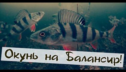 Сергей Сорокин: Напал на стаю окуня - Зимняя рыбалка