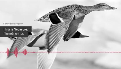 Птичий компас