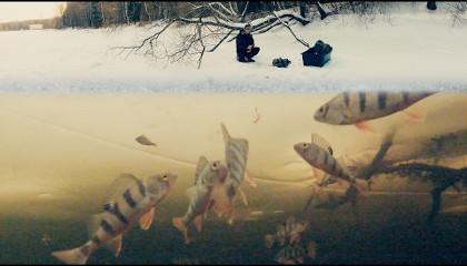 Сергей Сорокин: Ловля плотвы и окуня на мормышку (Зимняя рыбалка)