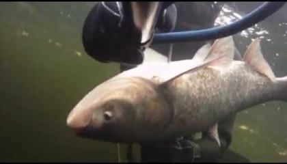 Александр Уткин: Подводная охота (Январь в Волгограде)