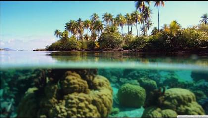 Кислотный Океан / Acid Ocean