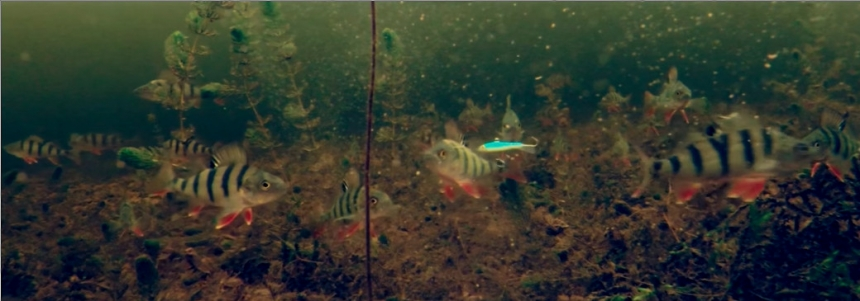 Напал на стаю окуня - Зимняя рыбалка