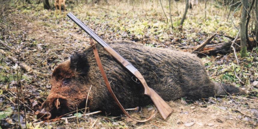 Загонная охота – особенности и правила безопасности
