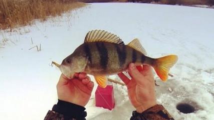 Always Alone: Рыбалка в феврале. Разведка на жерлицы. Ловля окуня зимой. Щука. Густера.