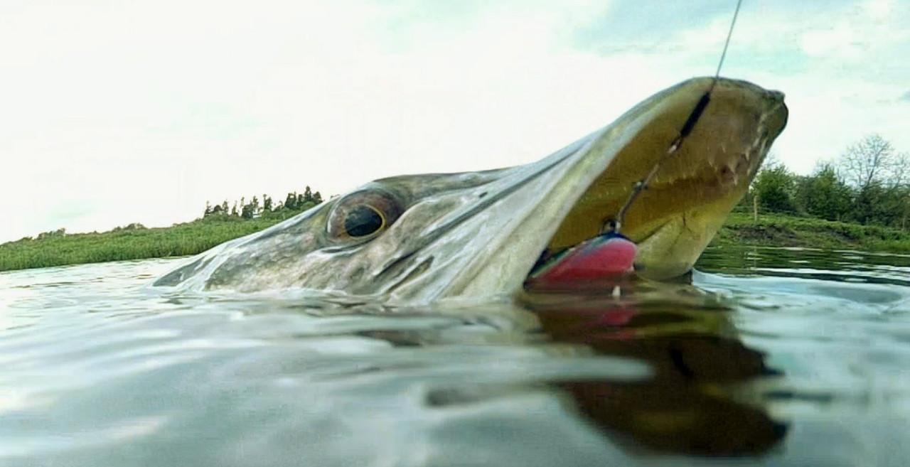 река малый балык рыбалка
