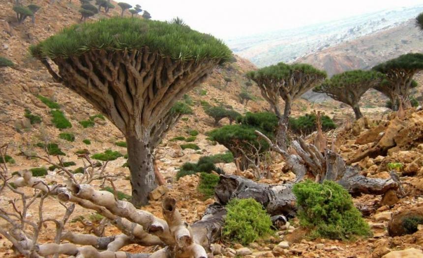 Остров Сокотра (Socotra)