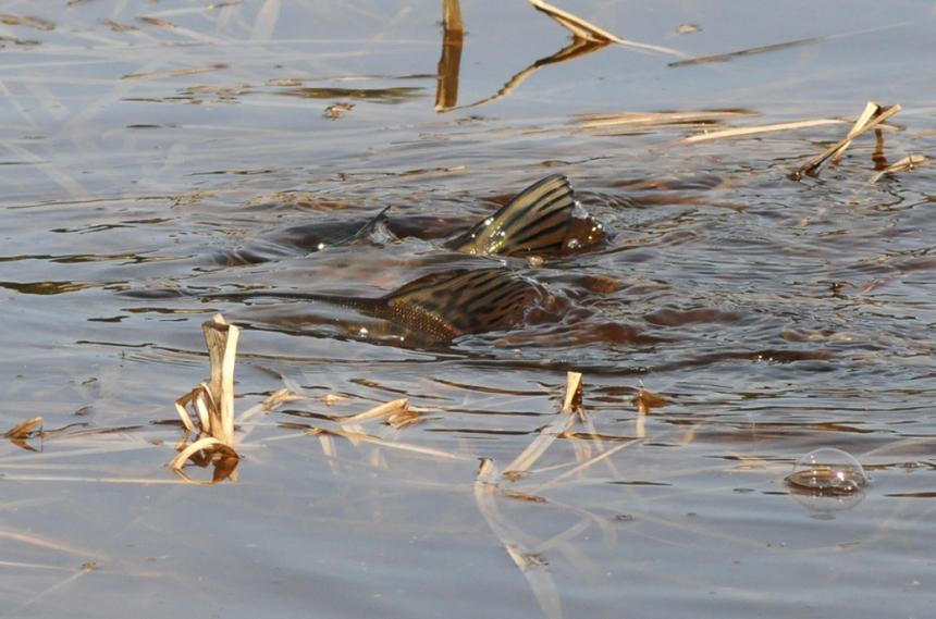 Ловля щуки на малых реках