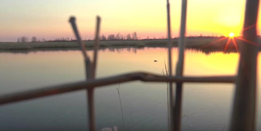 Открытие охоты на утку, шулюм и копчение утки!