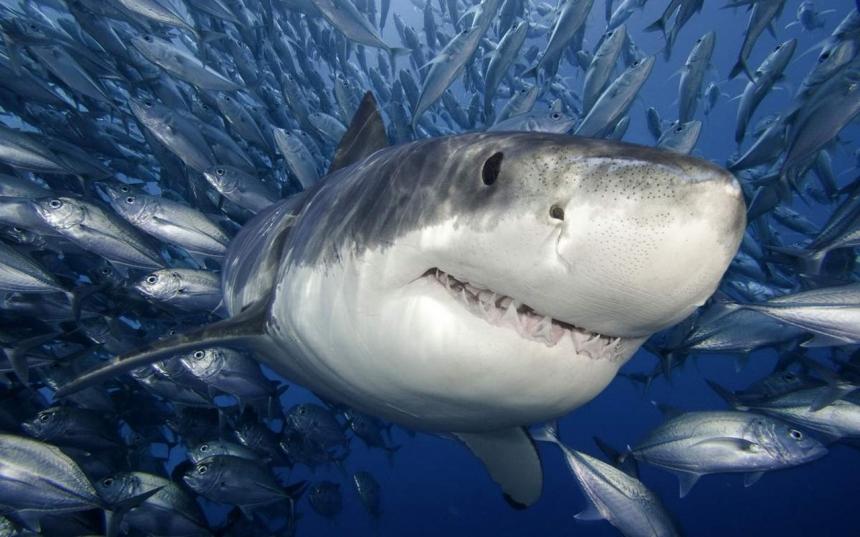 Самые опасные обитатели морских глубин
