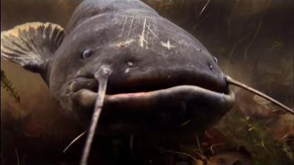 ALEX GROM: Подводная охота на сома в ПЛАВНЯХ