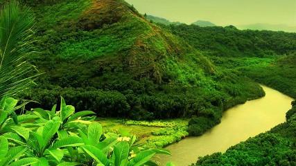 Обитатели реки Амазонка