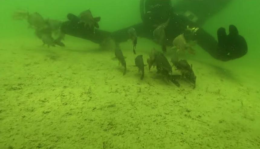 Полезный и интересный проект о зарыблении водоёма.