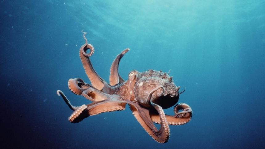 Как освободиться от объятий осьминога