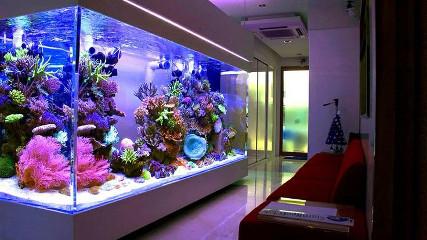 Содержание морских обитателей дома