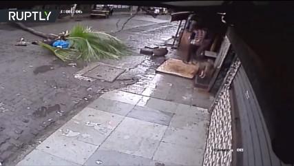 Известную телеведущую убило пальмой (Индия)