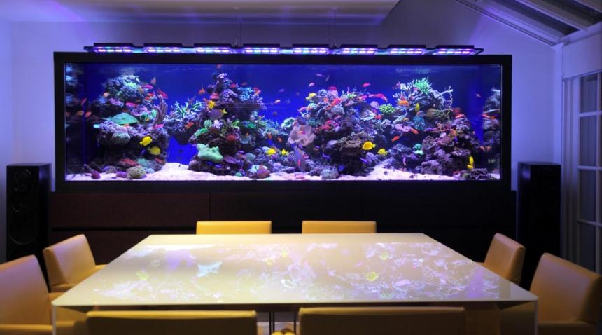 Морской аквариум дома