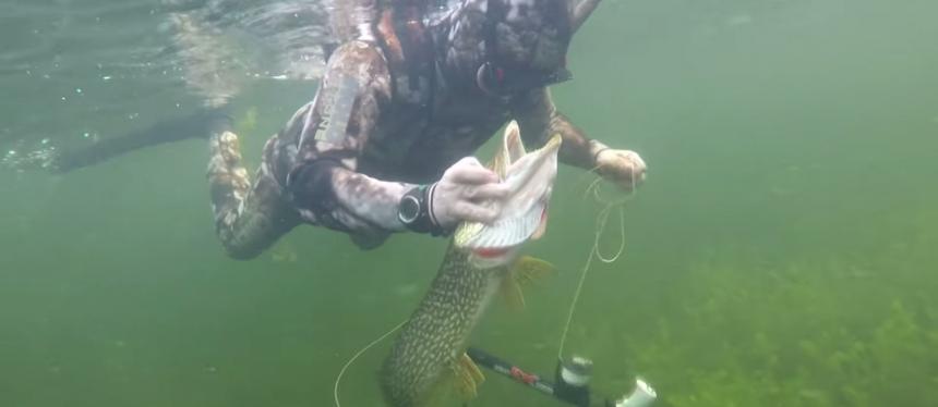 Видео подводной охоты Путина на щуку в Туве / Video spearfishing for pike Putin in Tuva