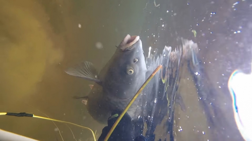Подводная охота и рыбалка Икрянинском районе