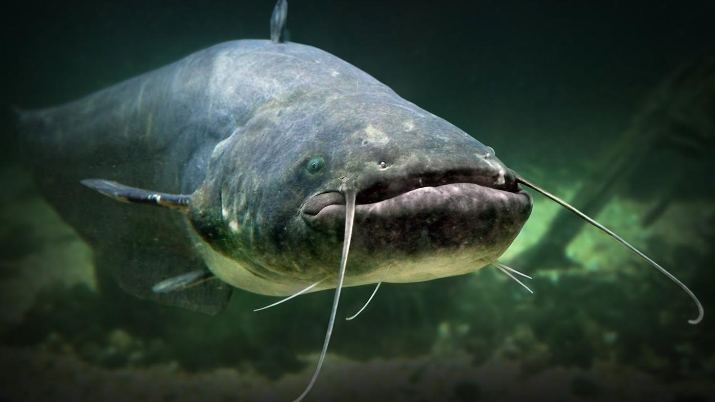 Подводная охота без цензуры - Летим в Астрахань