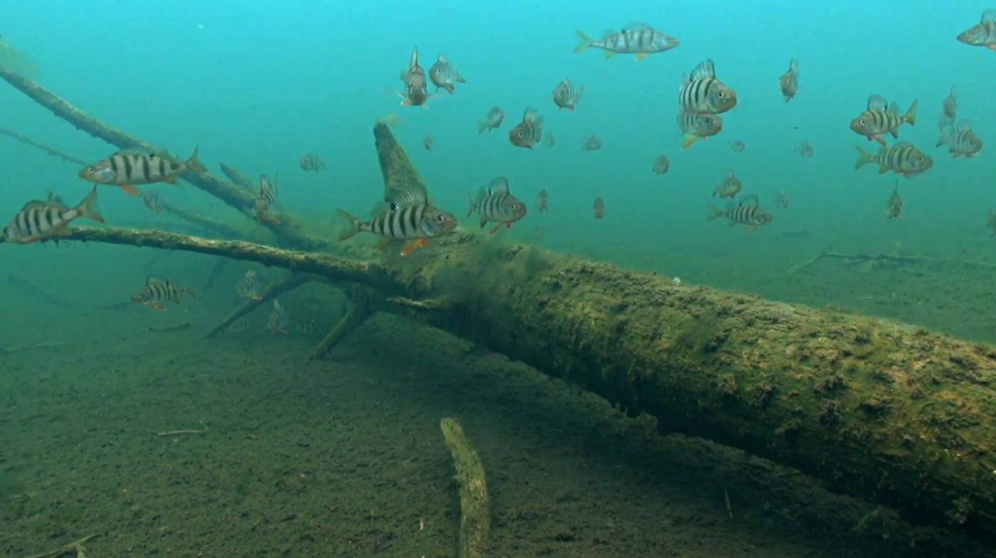 Подводные съёмки, природы, аэросъёмка.