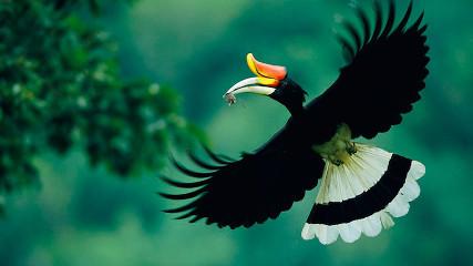Птицы Калимантана (Остров Борнео)