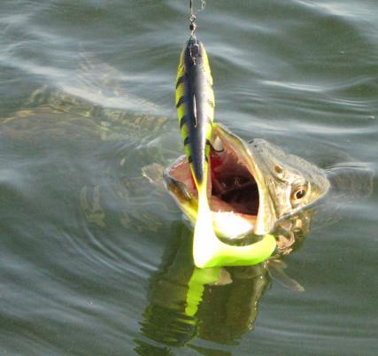 Ловля щуки на спиннинг, соревнование рыбаков