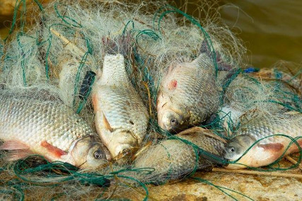 Закон о рыбалке сколько жерлиц можно