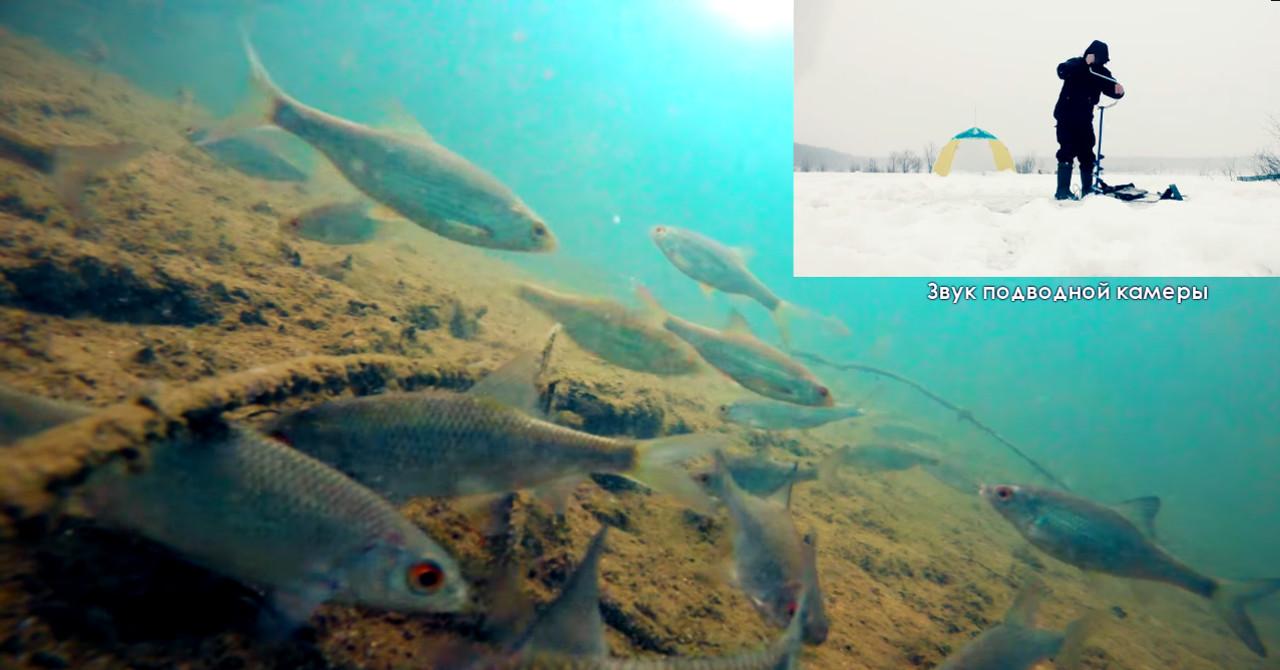 Боится ли рыба шума Ледобура?