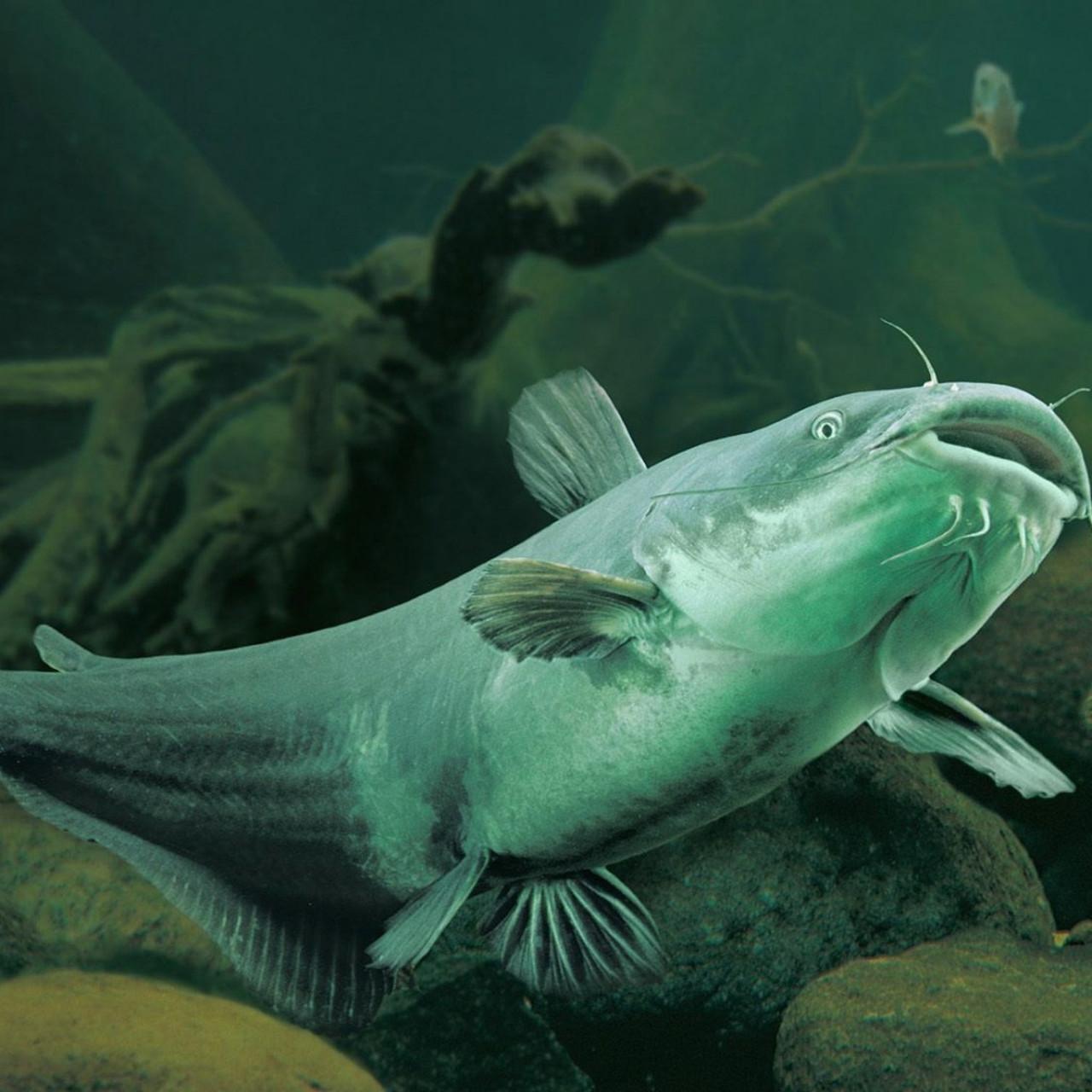 Запрет подводной охоты в Беларуси