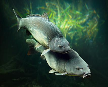 Суточная норма вылова рыбы
