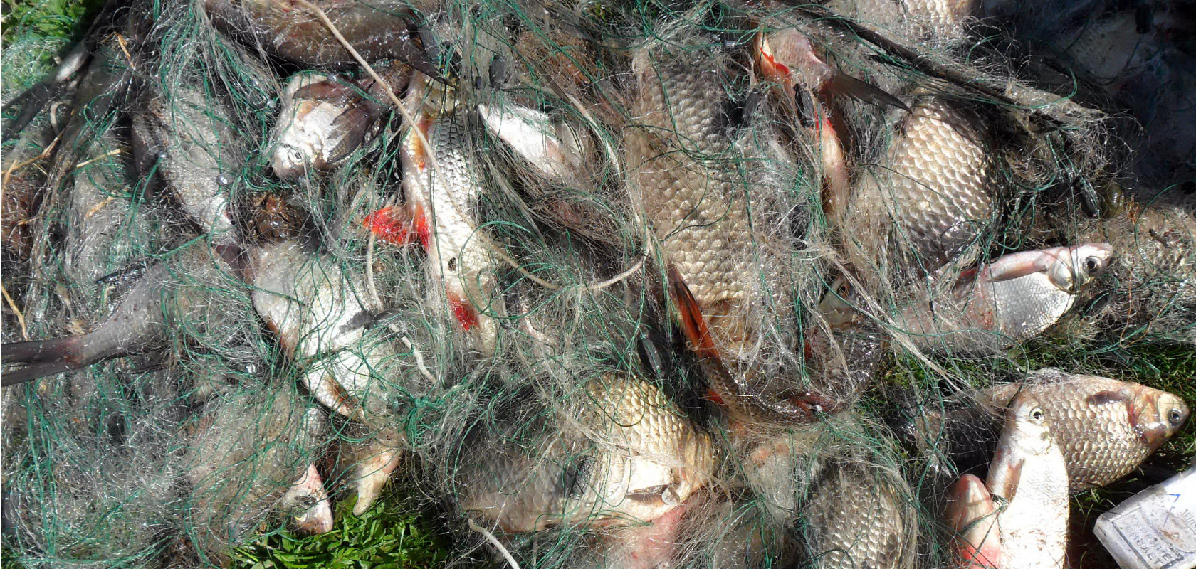 В Ярославской области проходят рейды по выявлению браконьеров