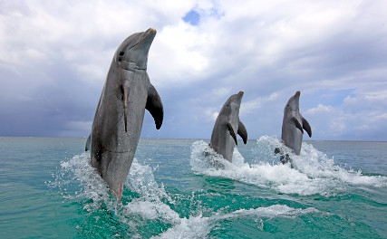 Дельфины самые наглые животные