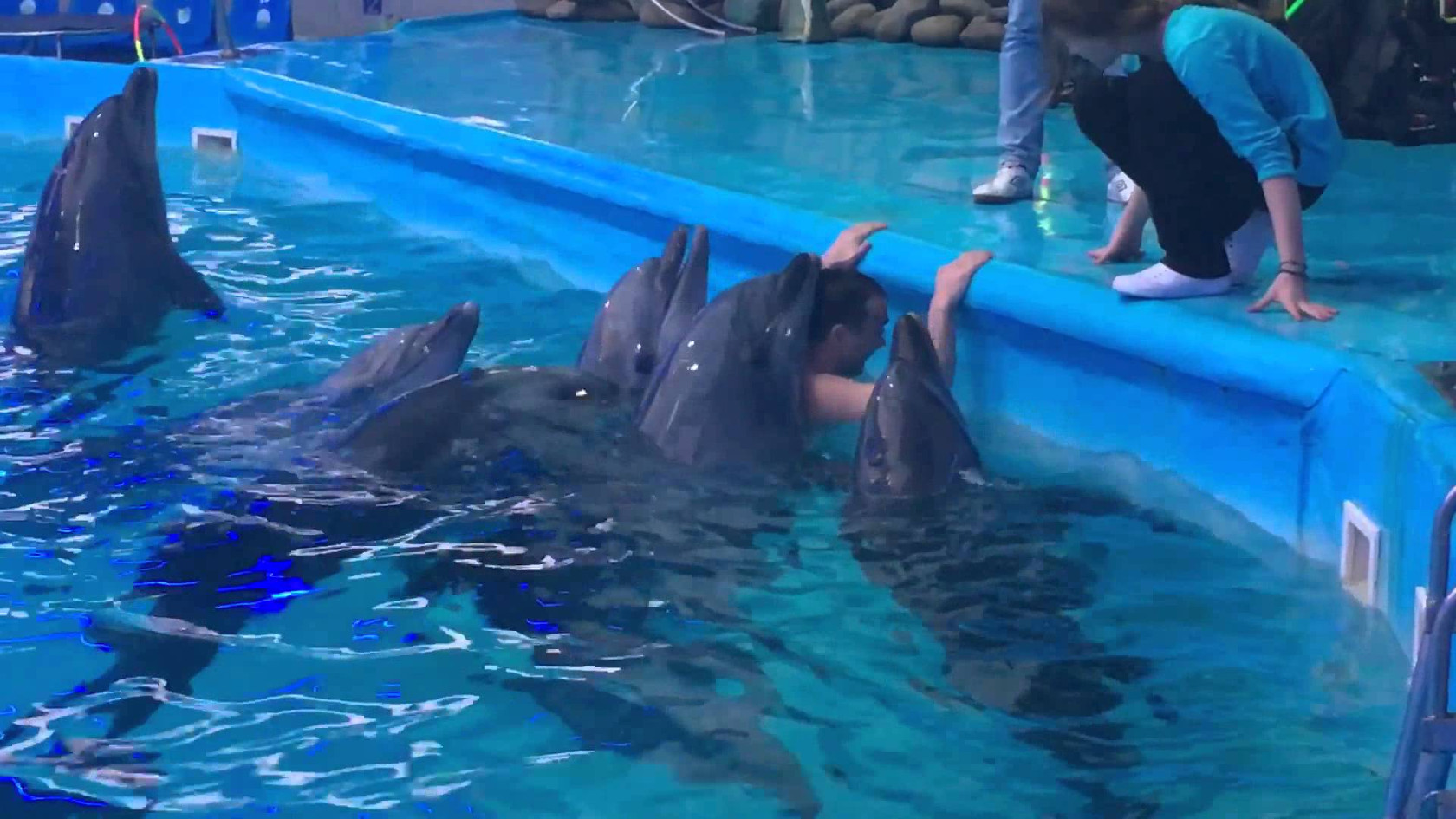 Нападение дельфина на человека