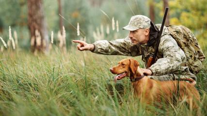 Охота с собаками: какие опасности могут подстерегать животное?